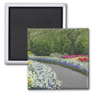 Sidewalk pathway through tulips and daffodils, refrigerator magnets