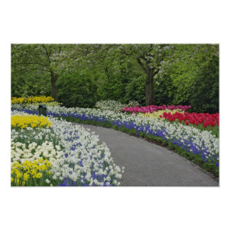 Sidewalk pathway through tulips and daffodils, poster
