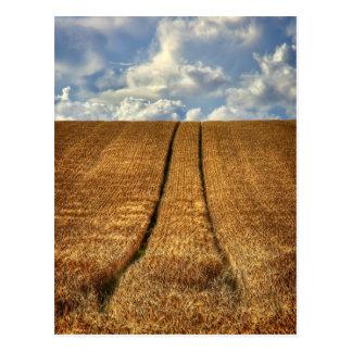Sido y campo de trigo ido con las pistas del postales