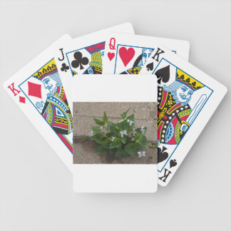 Sidwalk Fower Bicycle Playing Cards