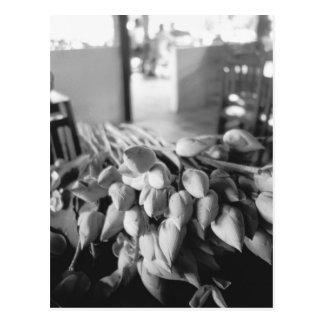 Siem Reap Cambodia, Lotus Flowers Postcard