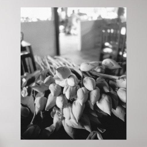 Siem Reap Camboya, flores de Lotus Póster