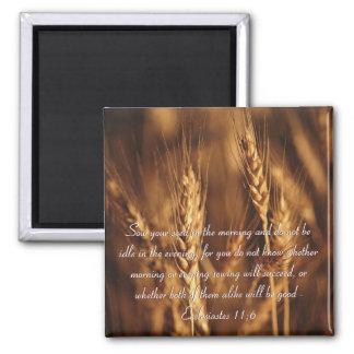Siembre su imán de la semilla… -