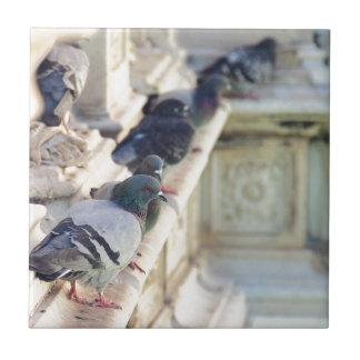 SIENA, ITALY Piazza del Campo Small Square Tile