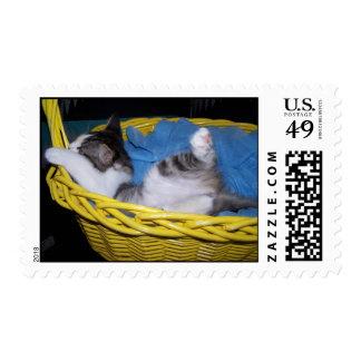 siendo tonto timbres postales
