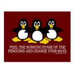 Sienta la mirada fija ardiente de los pingüinos postal