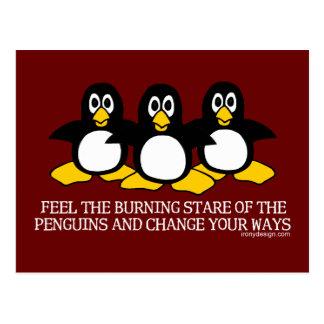 Sienta la mirada fija ardiente de los pingüinos tarjeta postal