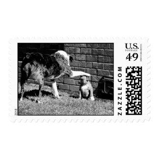 Siente - - la estancia - - - franqueo timbres postales