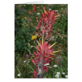 Sierra Indian Paintbrush Card