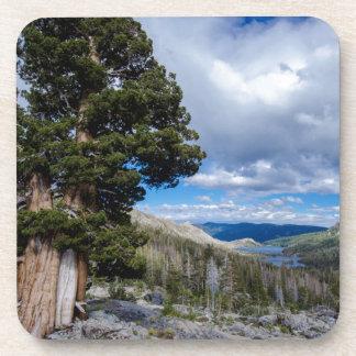 Sierra Juniper and Evergreen Trees 2 Beverage Coasters