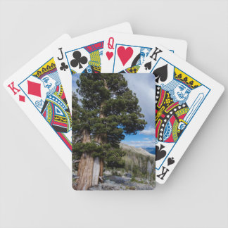 Sierra Juniper and Evergreen Trees 2 Bicycle Playing Cards