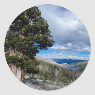 Sierra Juniper and Evergreen Trees 2 Classic Round Sticker