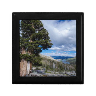 Sierra Juniper and Evergreen Trees 2 Gift Boxes