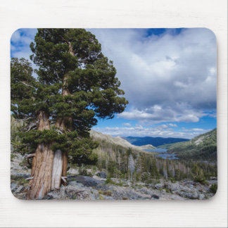 Sierra Juniper and Evergreen Trees 2 Mouse Pad