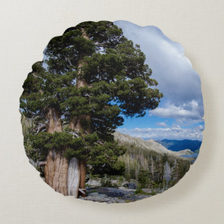 Sierra Juniper and Evergreen Trees 2 Round Pillow