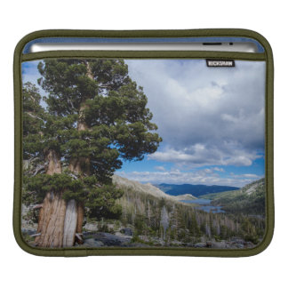 Sierra Juniper and Evergreen Trees 2 Sleeve For iPads