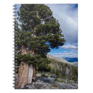 Sierra Juniper and Evergreen Trees 2 Spiral Note Books