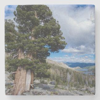 Sierra Juniper and Evergreen Trees 2 Stone Coaster