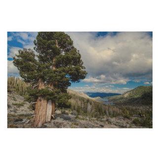 Sierra Juniper and Evergreen Trees 2 Wood Wall Decor