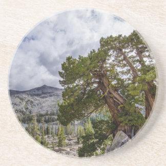 Sierra Juniper and Evergreen Trees Beverage Coasters