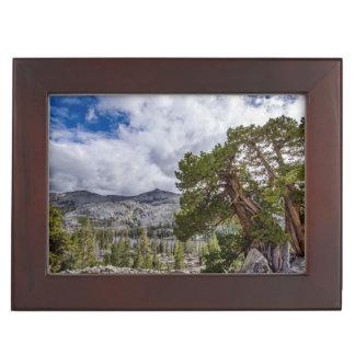 Sierra Juniper and Evergreen Trees Keepsake Box
