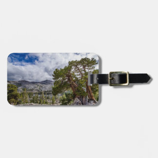 Sierra Juniper and Evergreen Trees Luggage Tag