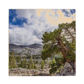Sierra Juniper and Evergreen Trees Maple Wood Coaster