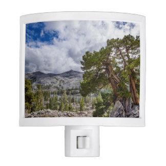 Sierra Juniper and Evergreen Trees Night Light