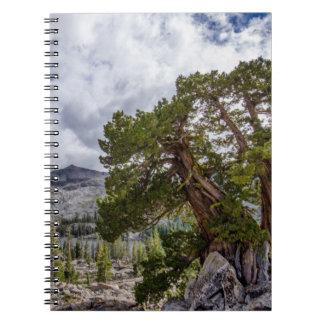 Sierra Juniper and Evergreen Trees Note Book