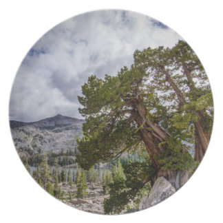 Sierra Juniper and Evergreen Trees Plates