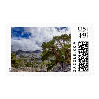 Sierra Juniper and Evergreen Trees Postage Stamps