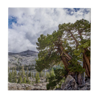 Sierra Juniper and Evergreen Trees Small Square Tile