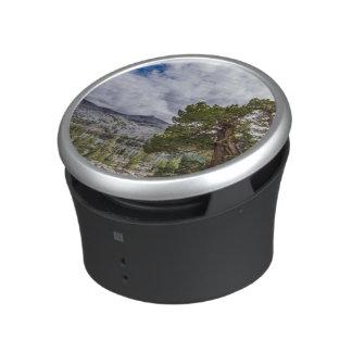 Sierra Juniper and Evergreen Trees Speaker
