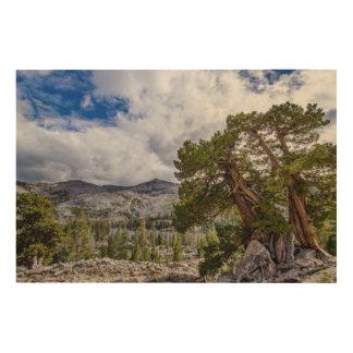 Sierra Juniper and Evergreen Trees Wood Wall Decor