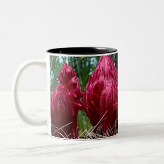 Sierra Wildflowers Coffee Mug - Snow Plant