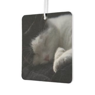 Siesta del gato