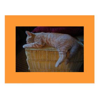 Siesta del gato del mango postales