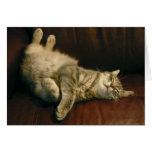 Siesta del gato - en el extremo felicitación