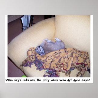 Siesta del gato mi cola póster