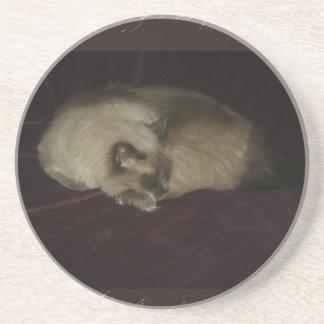Siesta del gato posavasos para bebidas