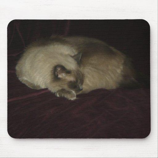 Siesta del gato tapetes de ratones