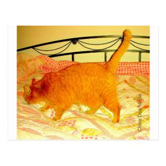 Siesta del gato tarjetas postales