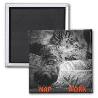 """¿Siesta o trabajo? El gatito dice """"siesta """" Imán Cuadrado"""