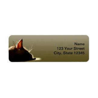 Siesta verde y gris del gato etiquetas de remite