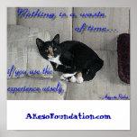 Siestas del gato impresiones