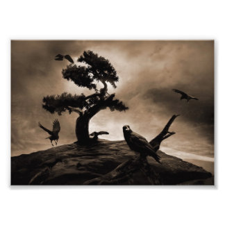 Siete cuervos impresion fotografica