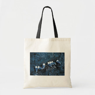 Siete kittiwakes negro-legged encaramados en edg d bolsa