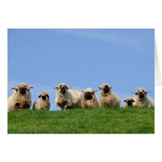 siete ovejas curiosas del rasta felicitación