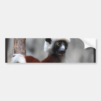 Sifaka Lemur  Bumper Stickers