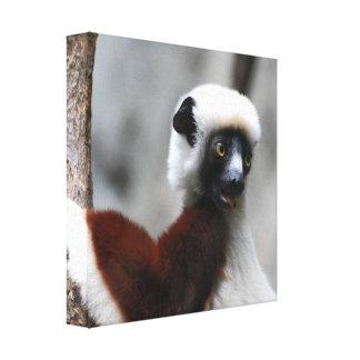 Sifaka Lemur Canvas Print